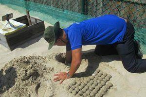 Tiếp nhận ổ trứng rùa biển đầu tiên của năm 2019 để tiến hành ấp nở