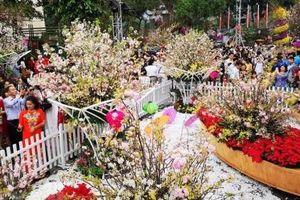 Lễ hội hoa Anh đào Nhật Bản-Hà Nội 2019 kéo dài thêm 1 ngày so với kế hoạch