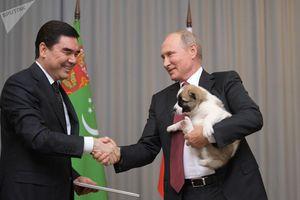Chiêm ngưỡng món quà '4 chân' vô cùng đặc biệt của Tổng thống Putin
