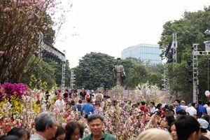 Lễ hội hoa anh đào 2019 kéo dài thêm 1 ngày