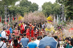 Rực rỡ lễ hội hoa anh đào