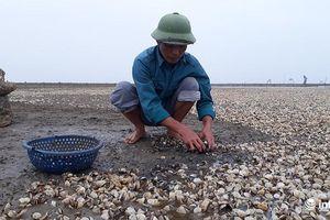 Thanh Hóa: Hàng trăm héc ta ngao chết trắng bãi, dân phá sản vì ngao