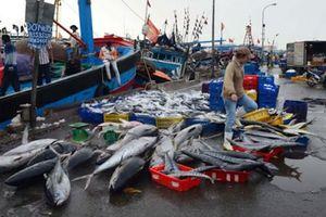 5.400 tấn cá 'mắc cạn' vì vướng Thông tư 21