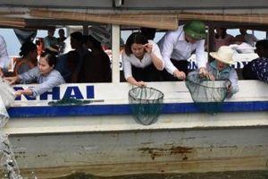Sơn La thả hơn 200.000 con cá các loại xuống hồ thủy điện