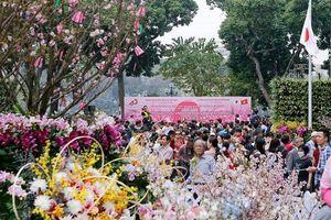 Hoa anh đào Nhật Bản khoe sắc giữa Thủ đô Hà Nội