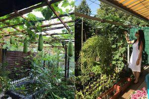 Thán phục mẹ Việt ở Đức biến 500m2 đất hoang thành vườn rau xanh mướt