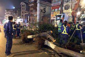 Vì sao Hà Nội bất ngờ nhổ bỏ hàng trăm cây phượng trong đêm?