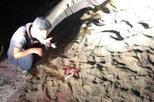Kinh hoàng bé trai 7 tuổi ở Hưng Yên bị một đàn chó cắn phải nhập viện