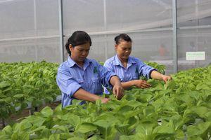 Hội Nông dân thành phố Hà Nội hỗ trợ nhiều hoạt động cho hội viên