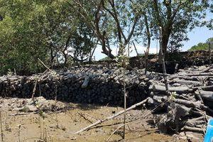 Đồng Nai: Núp danh nghĩa 'tỉa thưa' để tàn sát 182 ha rừng phòng hộ