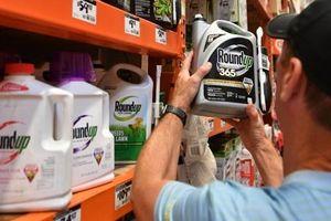 Thủ tướng chỉ đạo về thông tin Tòa án liên bang ở San Francisco kết luận thuốc diệt cỏ của Monsanto gây ung thư