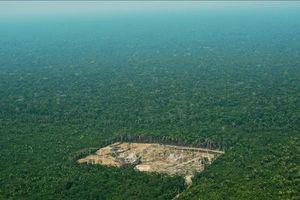 Amazon mất 30 triệu ha rừng nguyên sinh chỉ trong 17 năm