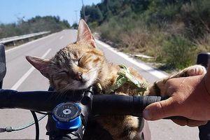 Chú mèo cùng anh thợ hàn đi du lịch khắp thế giới bằng xe đạp
