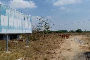 Vụ đấu giá khu dân cư Hòa Lân (Thuận An-Bình Dương): Không thể dùng tiền hợp thức hóa sai phạm