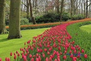 Vẻ quyến rũ mê hoặc của thiên đường hoa Keukenhof, Hà Lan