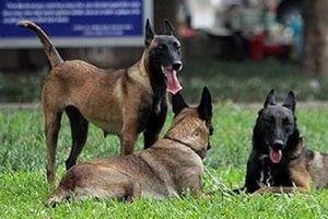 Chó cắn chết người: Chưa ai bị xử phạt vì tội thả rông chó
