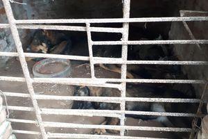 Chủ nuôi đàn chó cắn bé trai 7 tuổi tử vong: 'Hai ngày qua tôi không thể nào ngủ được vì ân hận, thương cháu bé'