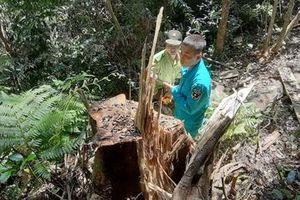 Rừng phòng hộ đầu nguồn suối Trà Veo bị tàn phá nghiêm trọng