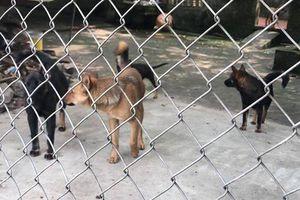 Bắt nhốt đàn chó cắn bé trai tử vong và từng tấn công nhiều người