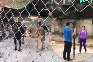 Bé trai 7 tuổi bị chó dữ cắn chết: Chủ đàn chó cầm mảnh vỡ uy hiếp phóng viên tác nghiệp