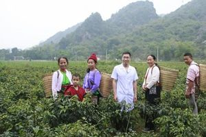 Lương y Hoàng Văn Tuấn: Kho thuốc sống của dân tộc Mường Hòa Bình