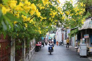 Những cung đường Sài Gòn rợp sắc hoa