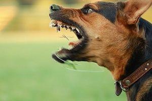 Bác sỹ khuyến cáo xử lý khi bị chó cắn