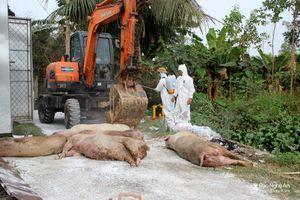 Đô Lương xuất hiện thêm nhiều đàn lợn bị ốm