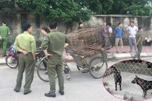 Đàn chó cắn tử vong bé trai 7 tuổi ở Hưng Yên được xử lý thế nào?