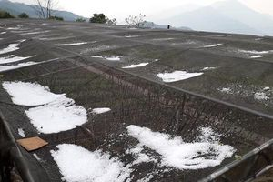 Mưa đá kinh hoàng ở Nghệ An, hoa màu của người dân hư hỏng nặng nề