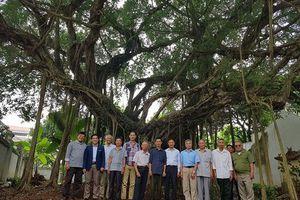 Thăm lại 'báu vật xanh' của làng quê Mai Lĩnh, Đồng Mai