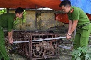 Bắt nhốt toàn bộ đàn chó cắn bé trai tử vong để xét nghiệm bệnh dại