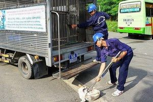 Các đội bắt chó thả rông ở TP.HCM và Hà Nội giờ ra sao?