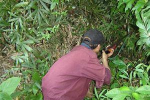 Đi săn khỉ bắn phải người cùng làng vì nhầm là... con khỉ
