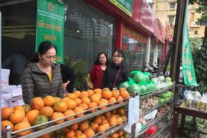 Hỗ trợ nông dân Hà Giang tiêu thụ cam sành
