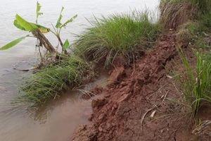 Xuân Trường (Nam Định): Bờ bãi tan hoang vì 'cát tặc'