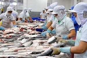 Xuất khẩu cá tra sang Anh tăng gần 70%