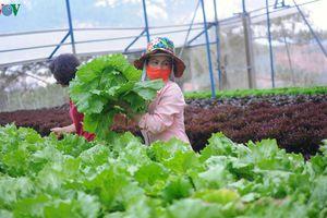 Vườn công nghệ cao giúp nông dân Đà Lạt thêm giàu có
