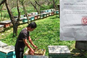 'Cưỡng chế' đàn ong ở Phú Thọ: Có liên quan đến lợi ích kinh tế?