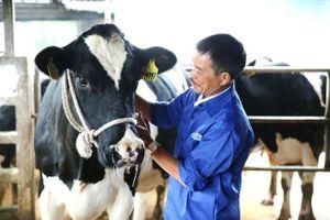 Mộc Châu Milk gia tăng giá trị nông nghiệp nhờ phát triển bền vững