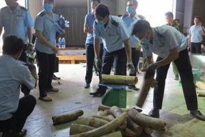 Hà Nội: Thu giữ nhiều sản phẩm nghi chế tác từ ngà voi