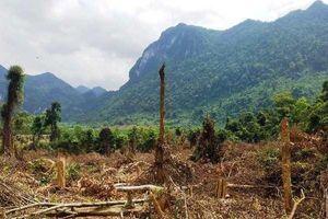 Quảng Bình lại xảy ra vụ phá rừng cách trạm kiểm lâm chỉ 500m