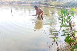 Vớt sứa ven sông, kiếm tiền triệu mỗi ngày.