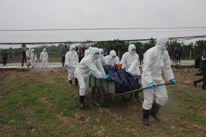 Hà Nội: 13 quận, huyện phát hiện dịch tả lợn châu Phi