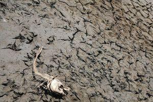 Bằng chứng 'chỉ điểm' Trái Đất đang ở giữa giai đoạn tuyệt chủng lần thứ 6