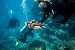 Rạn san hô di sản tổn hại vì nóng