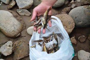 Lào Cai: Cá chết bất thường trên sông Hồng là do người dân 'ruốc' cá