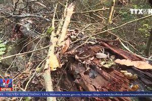 Khởi tố vụ phá rừng tại vườn Quốc gia Phong Nha –Kẻ Bàng