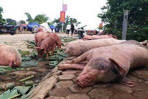 Tỉnh đầu tiên của Việt Nam công bố hết dịch tả lợn châu Phi
