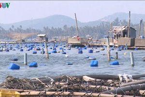 Nhức nhối nạn đánh bắt hải sản hủy diệt ở Phú Yên